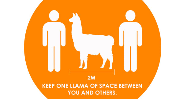 llama-physical-distancing-orange_1728x980_acf_cropped